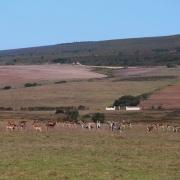 Zebras und Antilopen