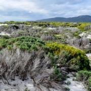 Western Cape Dünen