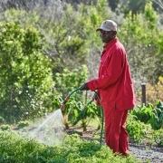 Smiling Gardener is watering plants