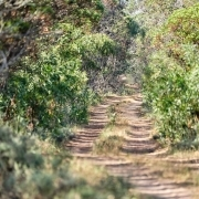pathway southafrica