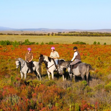 Horse riding through the Fynbos