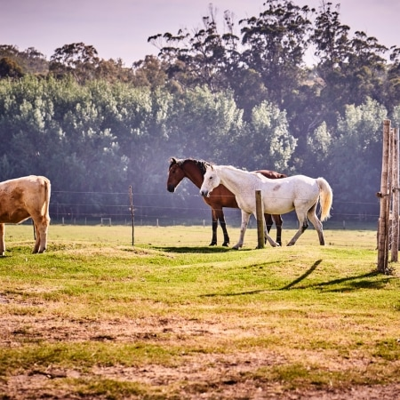 Horses on a Farm in the Western Cape
