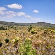 Fynbos Gardenroute