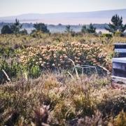 Fynbos Biohonig