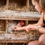 bio Eier sammeln