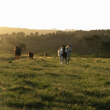 Horses Western Cape