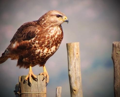 Vögelbeobachtung