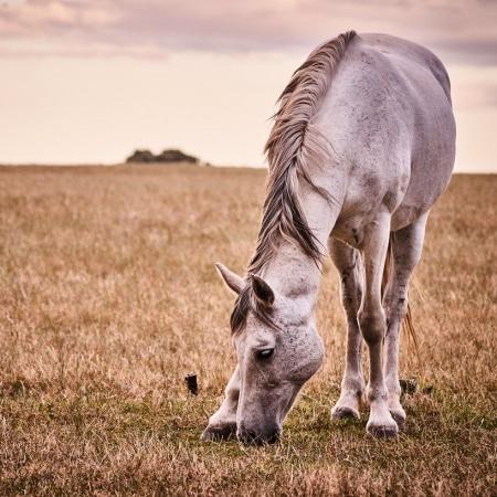 Horse Western Cape