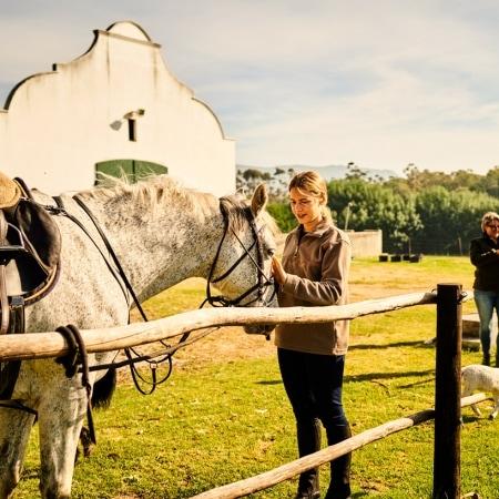Western Cape, Horse, Rider